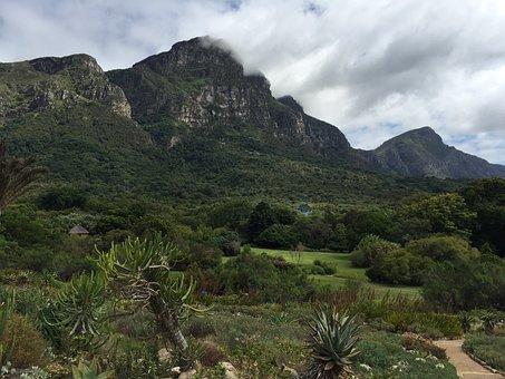 Mountain, Kirstenbosch, Botanical, South, Africa