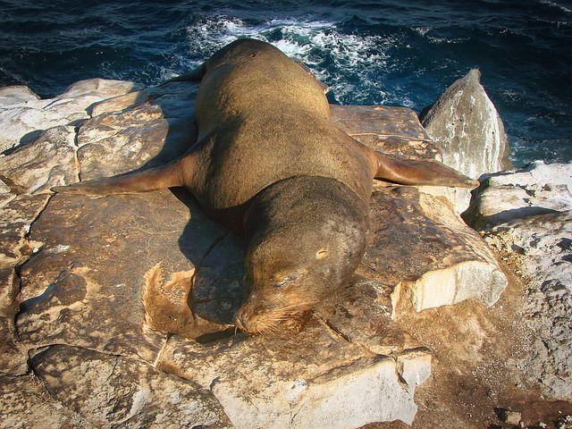 Sea Lion, Resting, Aquatic, Baby Sea Lion, Beach, Brown
