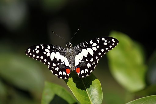 Butterfly, Insects, Gardens, Plants, Green, Leaves