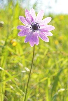 Flower, Violet, Light, Sun, Colorful Flowers, Spring