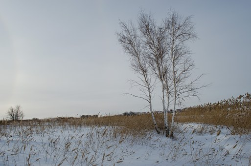 Field, Winter, Wood, Reed, Grass, Nature, Frost, Ice