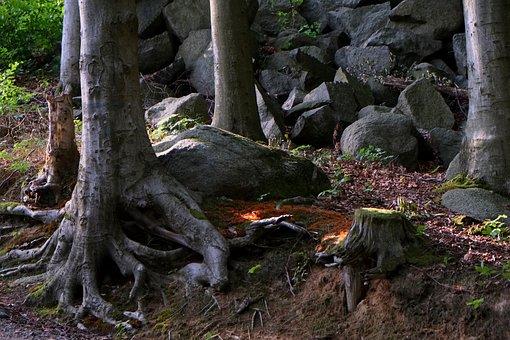 Root, Steadfast, Tree, Log, Nature, Old, Wood, Gnarled
