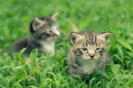 Animal, Cat, Cute, Kitty, Pet, Curious, Domestic, Face