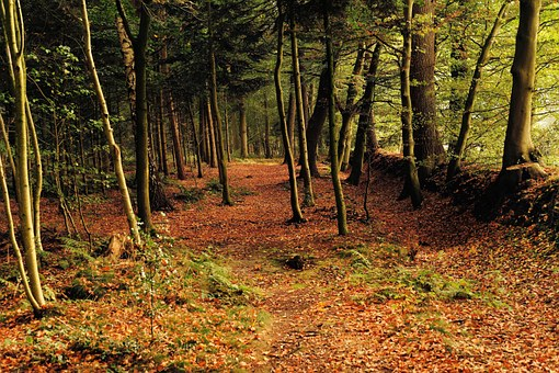 Forest, Trees, Late Summer, Leaves, Nature, Landscape