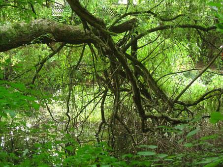 Baustamm, Gnarled, Forest, Tree, Nature, Landscape
