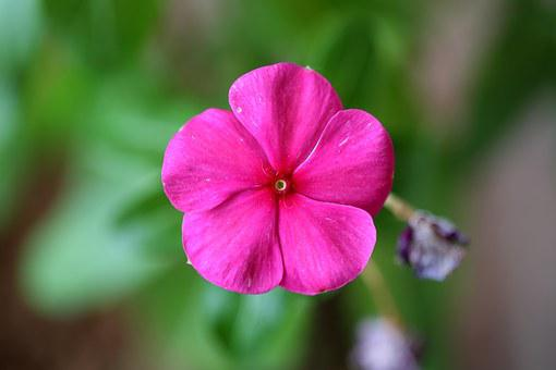 Good Night Flower, Colorful, Natural