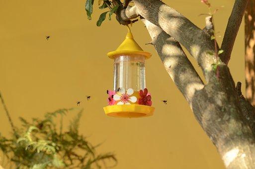 Drinking Fountain Hummingbird, Bees, Nectar, Nature