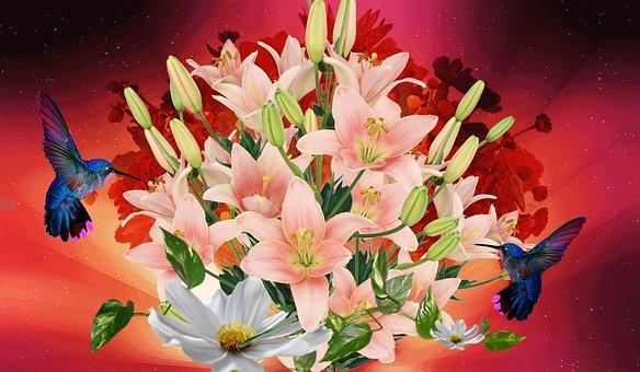 Lilies Salmon, Lirios, Flowers, Flower, Nature, Sky