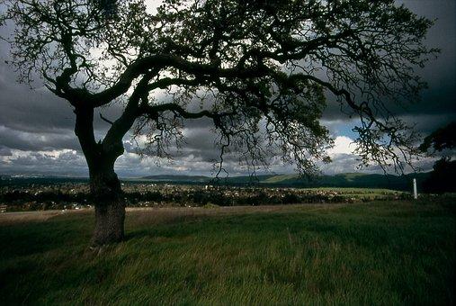 Tree, Oak, Riparian, Spring, Weather, Cloudy, Green