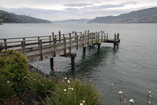 Water, Pier, Cormorants, Harbor, Dunedin, Otago, Winter