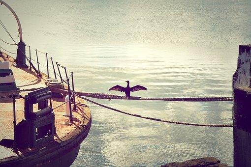 Cormorant, Sea Raven, Mooring, Water, Harbour, Ropes