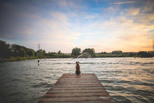 Dog, Pet, Wooden Pier, Lake, River, Wild, Water, Swim