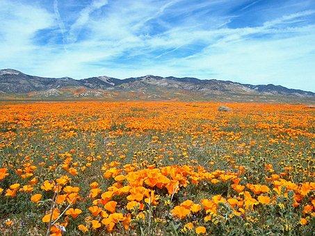 Wildflower, Flower, Flora, Meadow, Wild Flower, Bloom