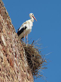 Stork, Bird, Nest, Silves, Algarve, Portugal, Castle