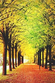 Artistically, Art, Autumn, Autumn-appearance, Park