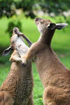 Animal, Attack, Australian, Beat, Boxing, Duo, Fight
