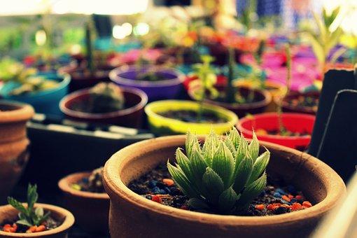 Flower, Cactus, Penca, Cardillo, Thorns, Nature, Desert