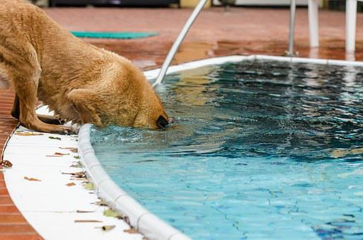Pool, Dog, Summer, Underwater, Belgian Shepherd Dog