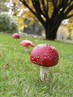 Mushroom, Fungi, Toadstool, Fresh, Edible, Natural