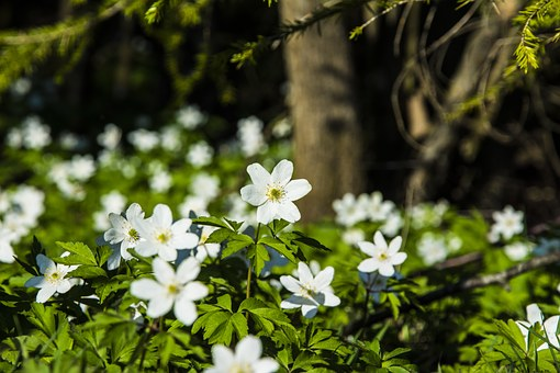Flowers, Our, Ekeberg, Grass, Trees, Sun