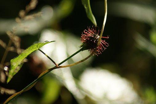 Nature, Rank Plant, Weed, Filligran, Backlighting, Mood