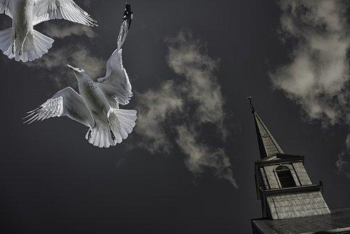 Seagulls, Birds, Animals, Flight, Wings