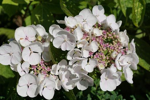 Flower, White, Plant, Botanical Garden, überlingen