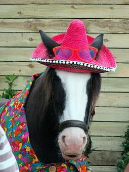 Horse, Disguised, Head, Heavy, Hat, Sombrero, Ears