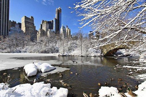 Park, New York, Manhattan, Winter, Snow, Ice, Duck