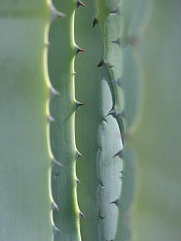Agave, Leaves, Texture, Abstract Background, Skewers