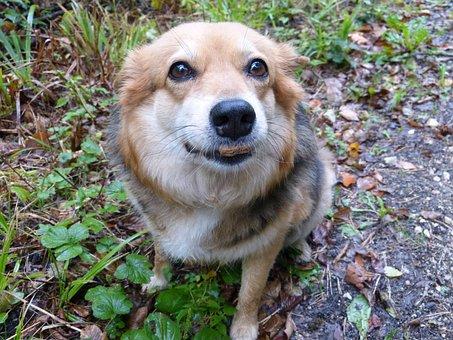 Dog, Domestic Dog, Food, Cookies, Eat, Mammal