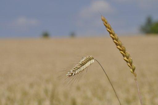 Petra Söhner, Anna Lina Artline, Ecard, Wheat