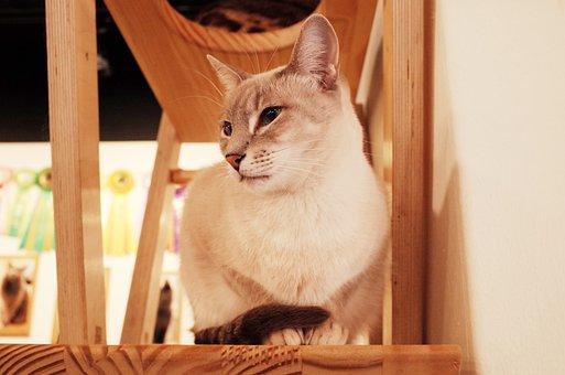 Cat, Cat Cafe, Cute, Animal, Pets, Cute Animals, Cats