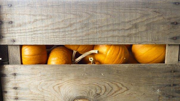 Fall, Harvest, Pumpkins, Autumn, Thanksgiving, Season