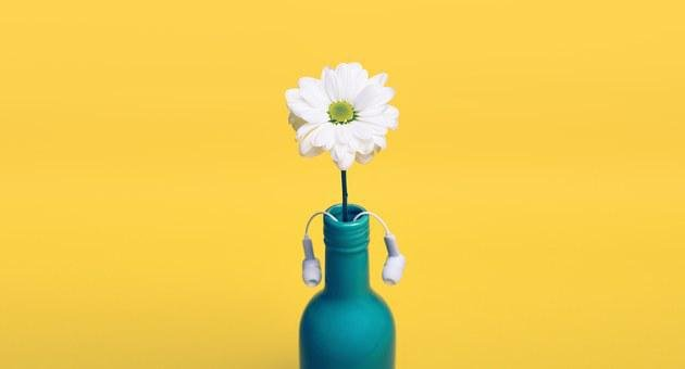 Yellow, Daisy, Bottle, Vase, Headphones, Earbuds, Decor