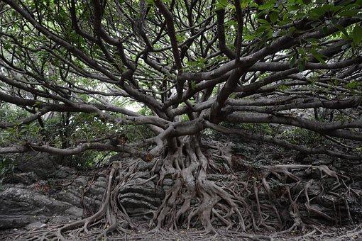 Cape Muroto, Banyan, Arboretum