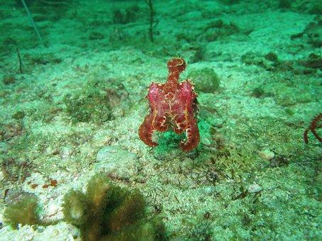 Cuttlefish, Cephalopod, Nature, Underwater, Wildlife