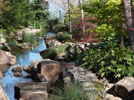 Arboretum, Creek, Fatsia, Japanese Maple, Spring