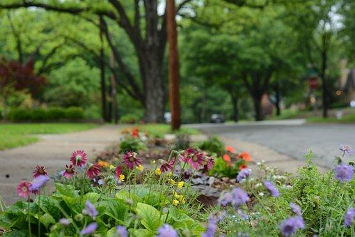 After Rain, Flowers, Street, Quiet Street, Flower Bed