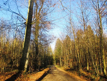Forest Path, Forest, Idyll, Migratory Path, Path