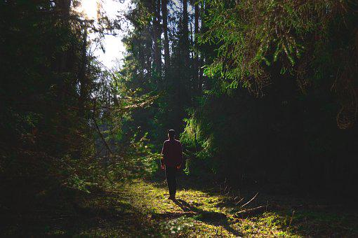 Forest, Man, Nature, Outdoors, Person, Trees, Woods