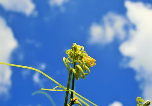 Plants, Buds, Vines, Green, Stems, Shoots, Blue, Sky