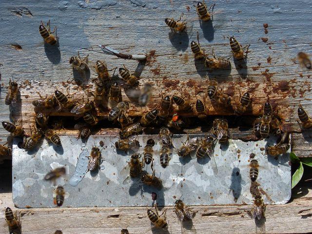 Diaper, Arna, Bees, Nest, Honey