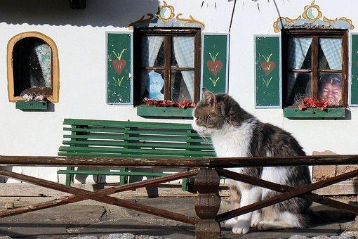 Pet, Cat, Cat Home, Cozy, Sitting, Home, Cat House
