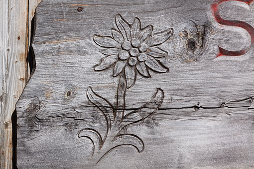 Edelweiss, Carved, Engraving, Wood, Hut