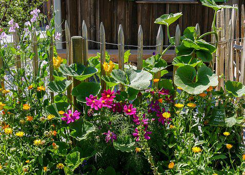 Flowers, Blossom, Bloom, Fence, Fence Lath