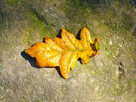 Leaf, Nature, Stone, Rock, Leaves, Autumn, Solitary