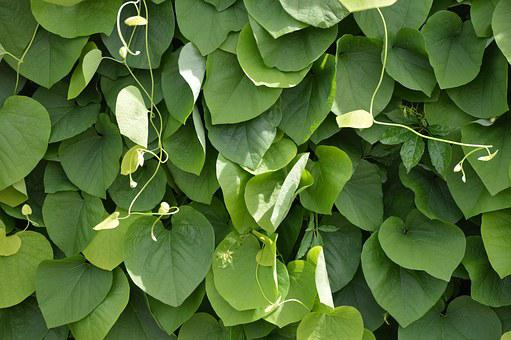 Texture, Leaves, Light, Sun, Green, Closed, Extremely