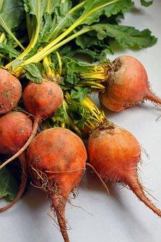 Beets, Organic, Farmer's Market, Yellow Beets, Garden