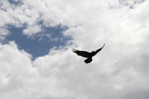 Crow, Raven, Bird, Sky, Silhouette, Black, Wing